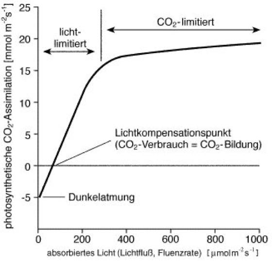 Photosynthese Spektrum