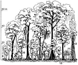 Agroforstwirtschaft tropischer regenwald