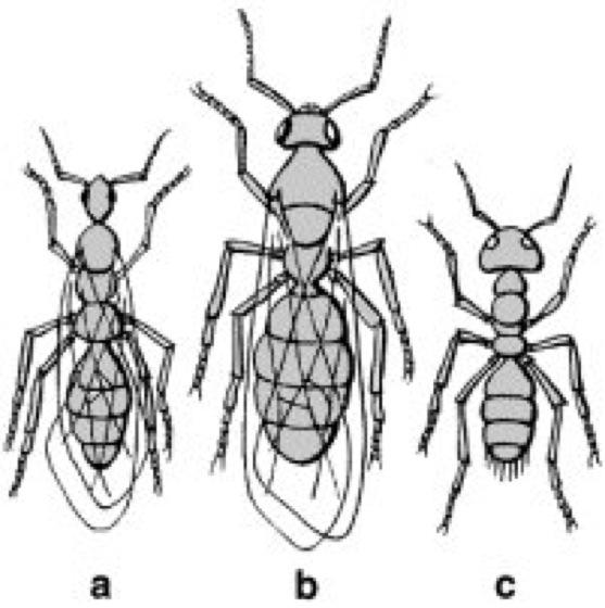 ameisen entfernen ameisen im haus bek mpfen haushalt. Black Bedroom Furniture Sets. Home Design Ideas
