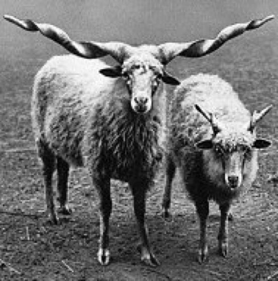Menschen sind wie Schafe- Über Alpha-Menschen und