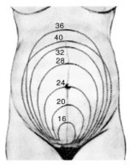 gewicht verlieren in der schwangerschaft