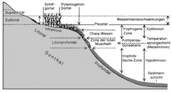 See - Lexikon der Biol...
