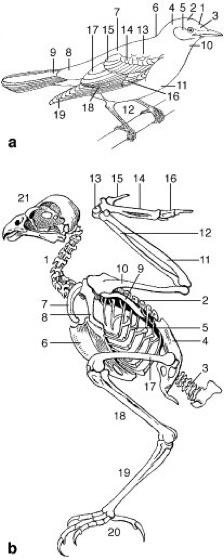 Vögel - Lexikon der Biologie