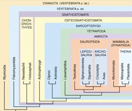 Wirbeltiere - Lexikon der Biologie