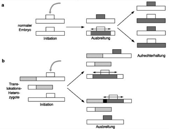 steroid sulfatase deficiency genereviews