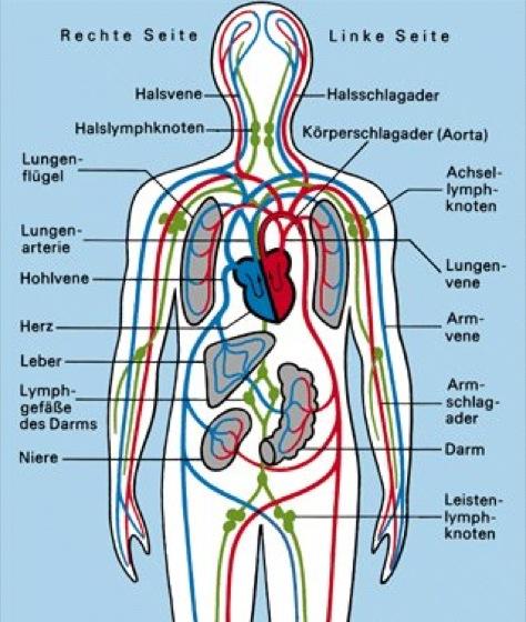 menschlicher stoffwechsel