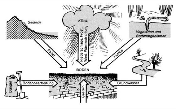 Bodenentwicklung lexikon der biologie for Definition von boden