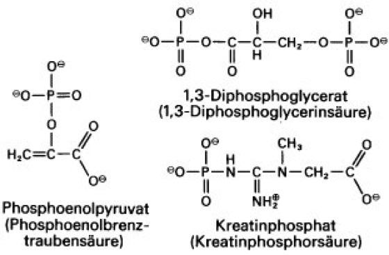 Energiereiche Verbindungen Lexikon Der Biologie