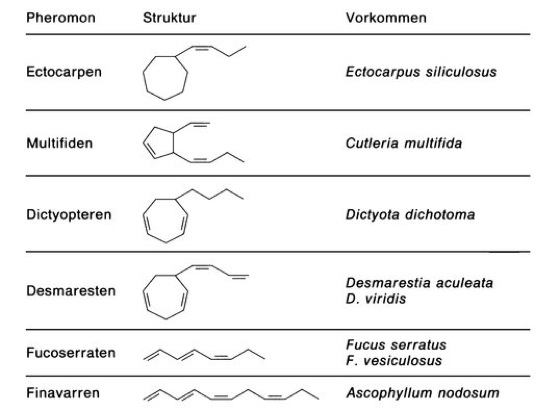Algen - Lexikon der Biologie