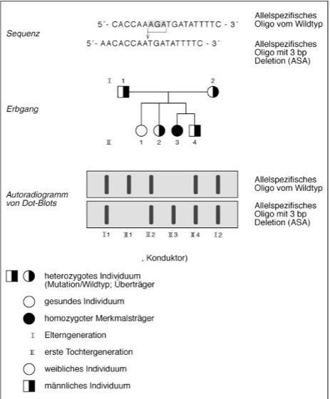 ASO - Lexikon der Biologie