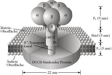 http://www.wissenschaft-online.de/lexika/images/biochemie/fff166.jpg