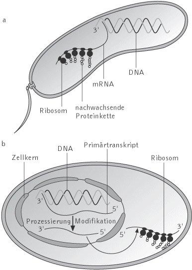 Kompaktlexikon der biologie