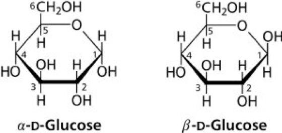 Glucose Kompaktlexikon Der Biologie