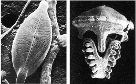 Mikroskop kompaktlexikon der biologie