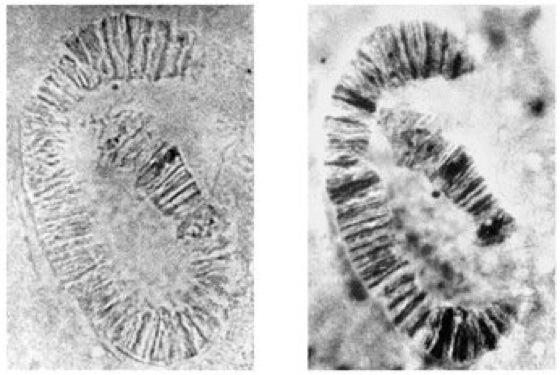 Mikroskopie kompaktlexikon der biologie