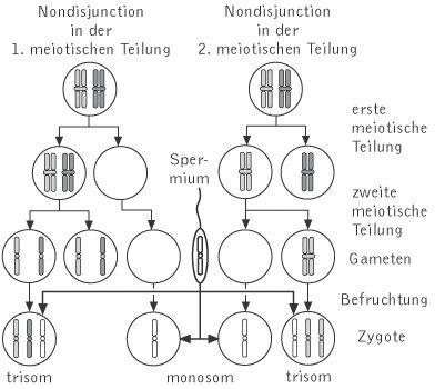 Non disjunction während der meiose i links und meiose ii rechts