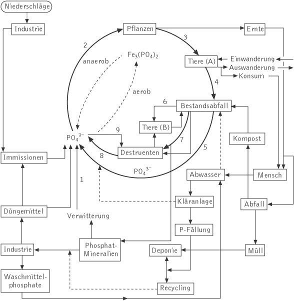 Kreislauf Der Der Kurzgeschlossene Kreislauf