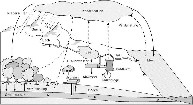 wissenschaft online kompaktlexikon der biologie wasserkreislauf abbildung i. Black Bedroom Furniture Sets. Home Design Ideas