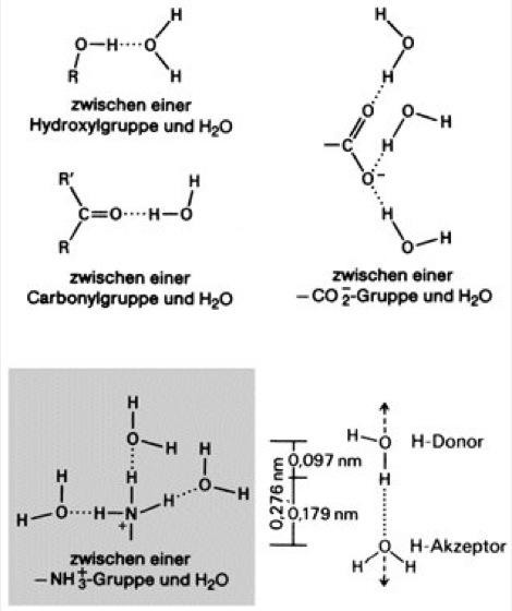 Beispiel wasserstoffbrückenbindung