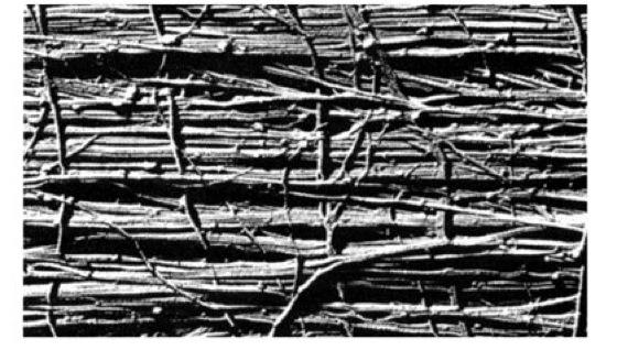 Zellwand aufbau einer verholzten zellwand die die anordnung der