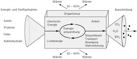 Stoffwechsel - Kompaktlexikon der Biologie