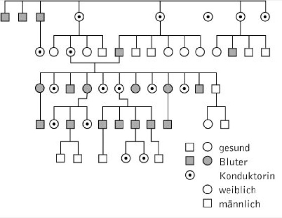Bluterkrankheit - Kompaktlexikon der Biologie
