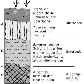 Boden kompaktlexikon der biologie for Bodentypen der erde