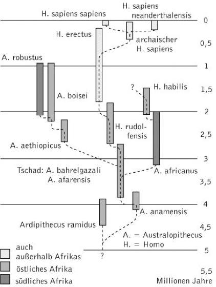 anthropogenese kompaktlexikon der biologie. Black Bedroom Furniture Sets. Home Design Ideas