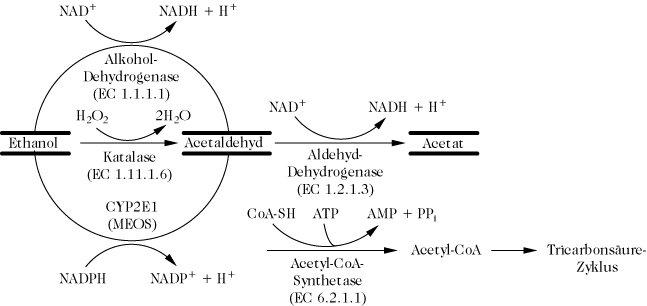 Die Pharyngitis beim Alkoholismus
