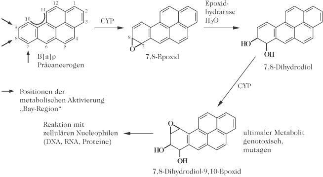 polyzyklische aromatische kohlenwasserstoffe