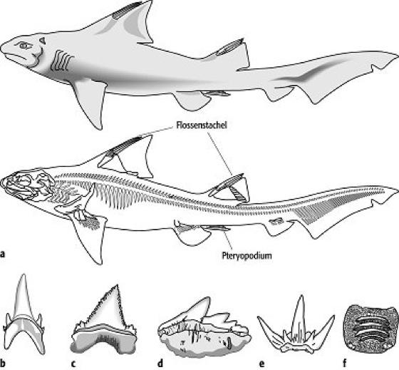 Fische - Lexikon der Geowissenschaften