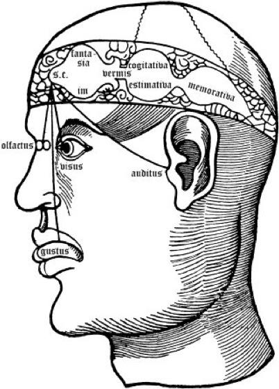 Ventrikeltheorie - Lexikon der Neurowissenschaft