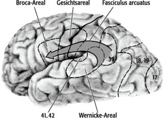Wernicke-Geschwind-Modell - Lexikon der Neurowissenschaft