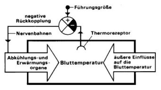 Temperaturregulation - Lexikon der Neurowissenschaft