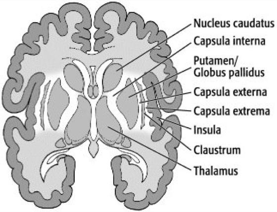 Capsula interna (innere Kapsel) || Med-koM
