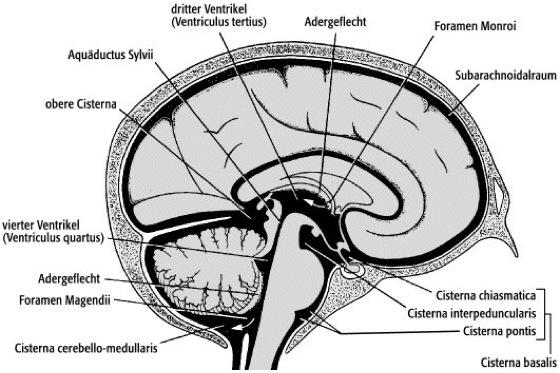 Cisterna subarachnoidea - Lexikon der Neurowissenschaft