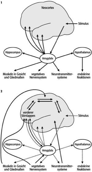 Emotionen - Lexikon der Neurowissenschaft