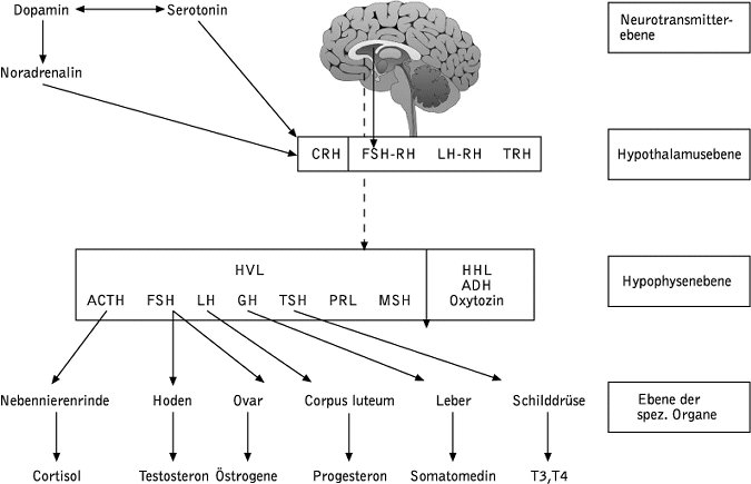 Hormone - Lexikon der Psychologie