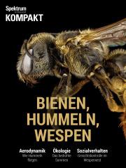 Cover Spektrum Kompakt:  Bienen, Hummeln, Wespen – Sechsbeiner mit Charakter