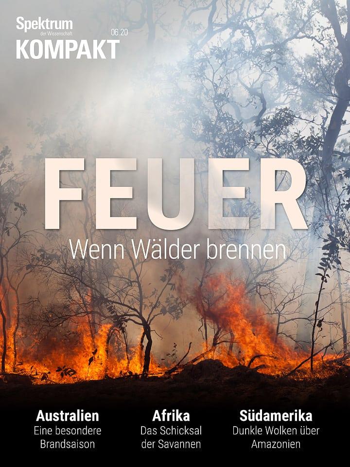Spektrum Kompakt: Feuer – Wenn Wälder brennen