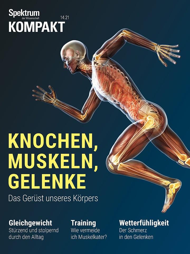 طیف فشرده: استخوان ها ، عضلات ، مفاصل - چارچوب بدن ما