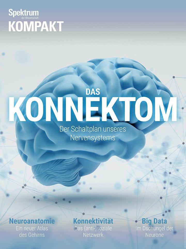Infografik: Konnektomik – ein Schaltplan des Gehirns - Spektrum der ...