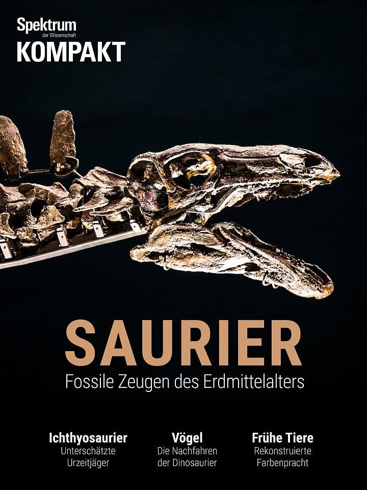 طیف جمع و جور: Saurtsi - شاهدان فسیل های قرون وسطی