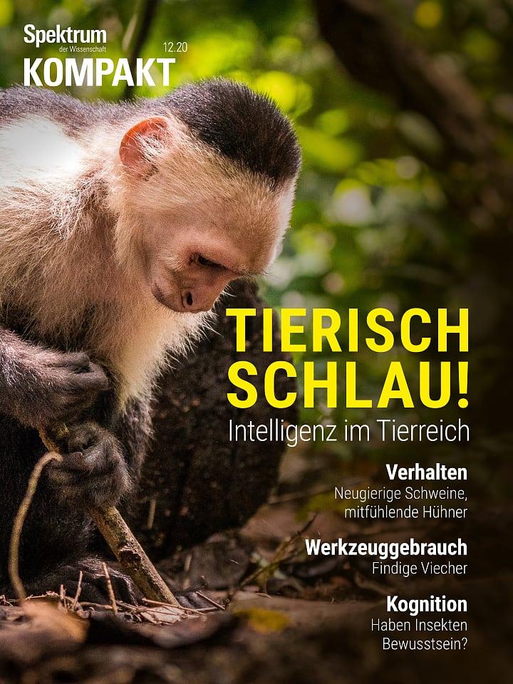 Compacto espectral: ¡Animal inteligente!  Inteligencia en el reino animal