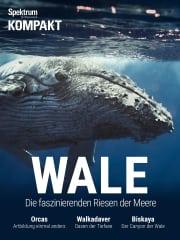 Cover Spektrum Kompakt:  Wale – Die faszinierenden Riesen der Meere
