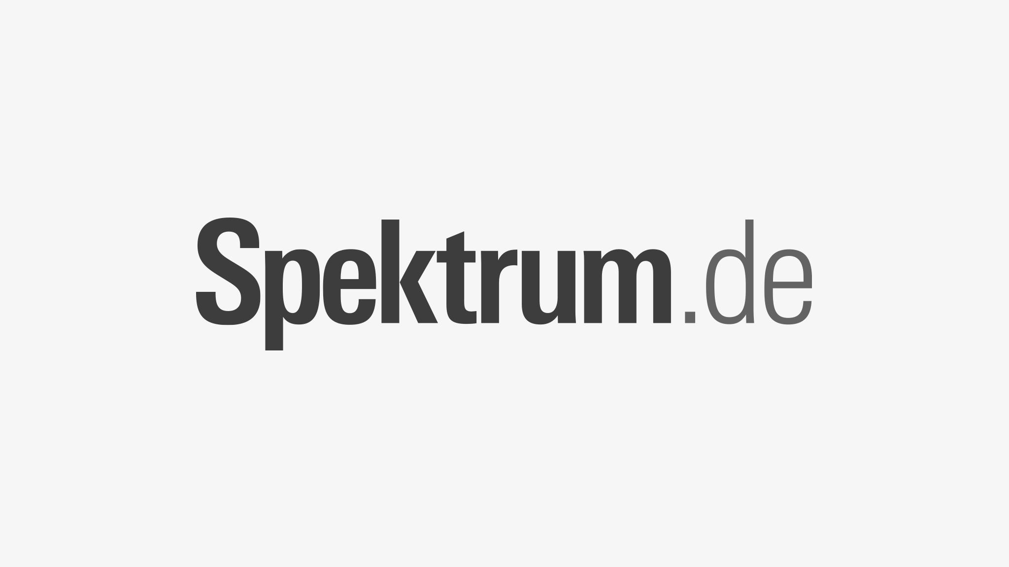 www.spektrum.de